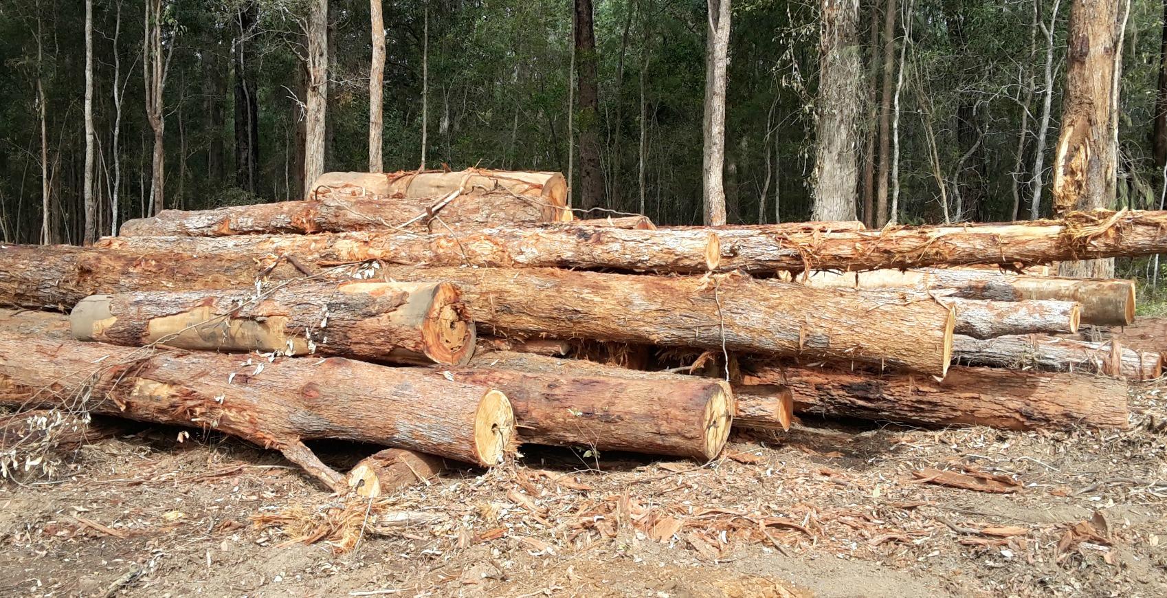 forest cut poles