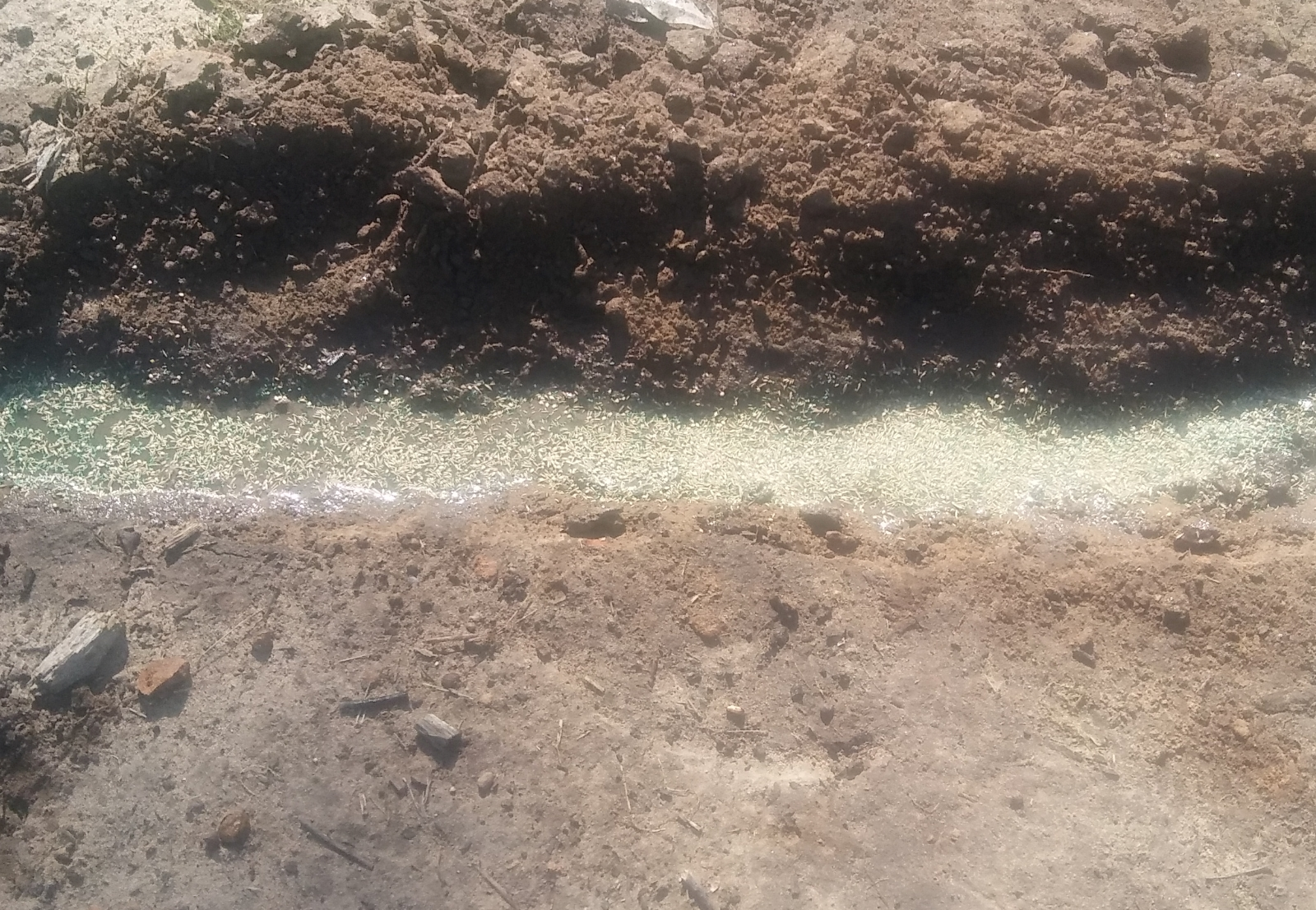 grass seeded trench